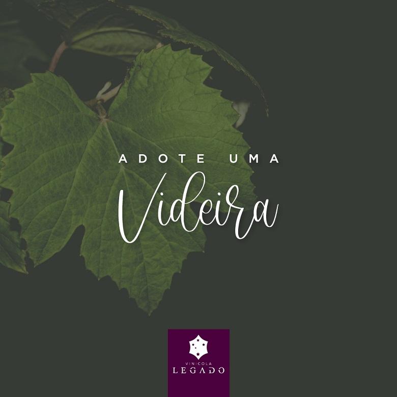 Vinícola Legado lança programa Adote uma Videira