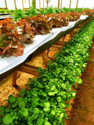 Restaurante Alquimia: 3 delícias veganas na charmosa Campos do Jordão