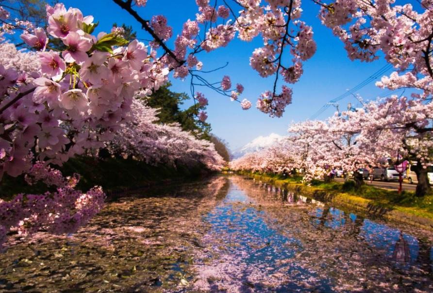 Japão: primavera no país encanta com flores e cores variadas